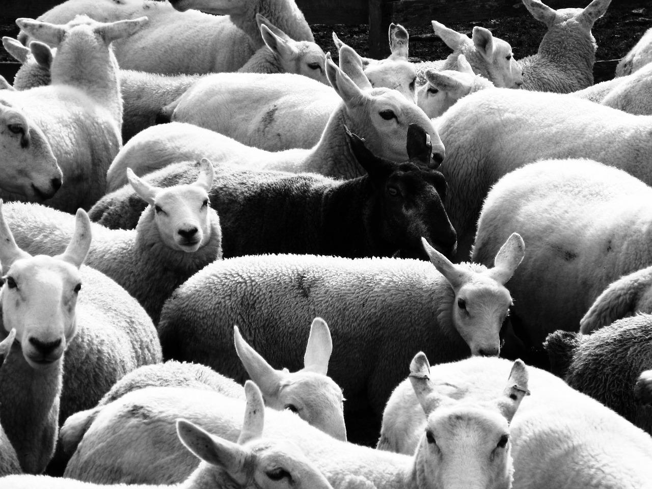 Was machen die schwarzen Schafe unter den Maklern?